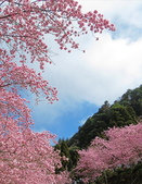 20200215恩愛農場富士櫻:ice_2020-02-15-21-29-05-282.jpg