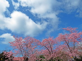 20200215恩愛農場富士櫻:ice_2020-02-15-21-18-54-890.jpg