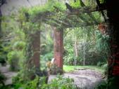 2016.10.15 6號花園:IMG_1203.JPG