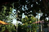 阿勃勒香草花園餐廳:DSC_6080.JPG