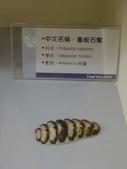 旗津貝殼館:5.3 (複製).JPG