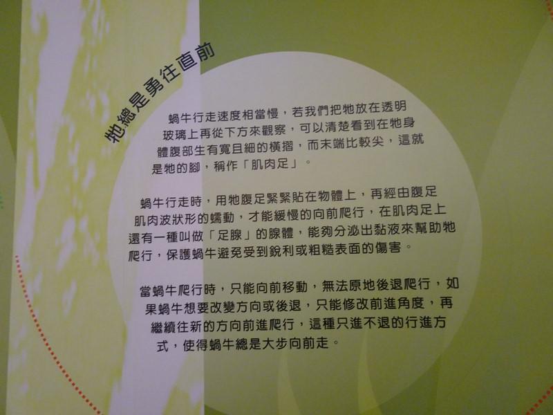 旗津貝殼館:2.0腹足 (複製).JPG