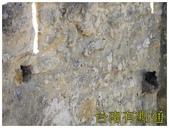 聖若熟城堡:9排水孔變成小鳥的家 (複製).JPG