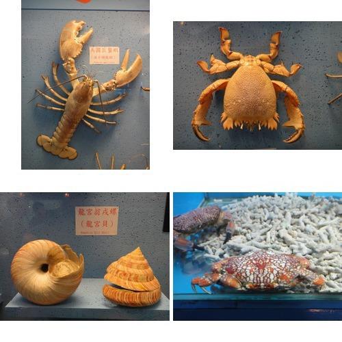 螃蟹博物館:相簿封面