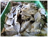 taboan魚乾市場:11乩童魚 (複製).JPG