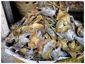 taboan魚乾市場:11魚乾3 (複製).JPG