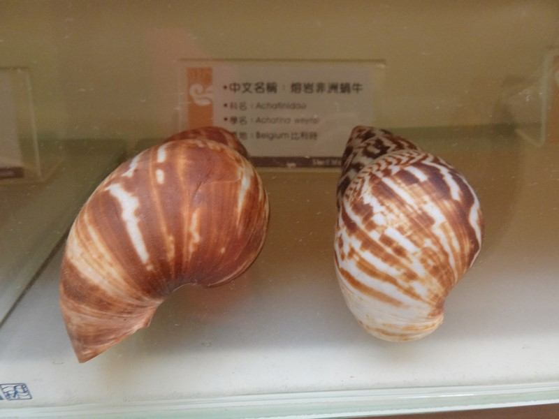 旗津貝殼館:2.3 (複製).JPG