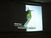 旗津貝殼館:2.4 (複製).JPG