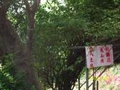 樹林大同山青龍嶺:1902099058.jpg