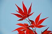 會館自然生態(春暖花開):CSC_0223.JPG