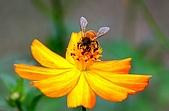 會館自然生態(春暖花開):DSC_0417.JPG