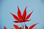 會館自然生態(春暖花開):CSC_0225.JPG