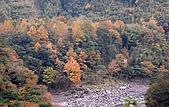 司馬庫斯冬之美:秀鑾塔克金溪的山林--13