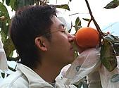 摩天嶺珍柿果園:DSC_0308.JPG