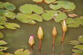 會館自然生態(春暖花開):CSC_0089.JPG