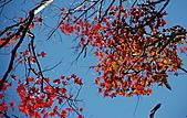 馬那邦山-楓情萬種:馬那邦山 025.jpg
