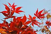 會館自然生態(春暖花開):CSC_0093.JPG