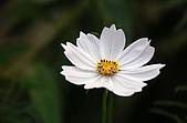 會館自然生態(春暖花開):DSC_0400.JPG