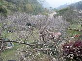 魯比寫真(感謝新社橄欖樹熱情慷慨的贈送):P1020032.JPG