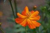 會館自然生態(春暖花開):DSC_0403.JPG