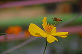 會館自然生態(春暖花開):DSC_0406.JPG