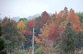 司馬庫斯冬之美:田浦小學校後山坡的山林之美--10