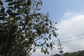六塘休閒谷2013-10-03:2013_0211_093320_六塘休閒谷之旅_竹東柿餅店.jpg