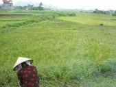 北越山水有陽光:vietnam 2008 06 22 060.jpg