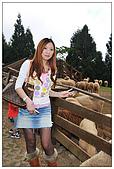 清境農場*合歡山:綿羊秀準備開始嘍~