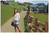 清境農場*合歡山:天氣很好^_^ 觀光團遊客也相當多~