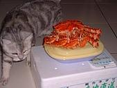2001:咪獎VS.鱈場蟹
