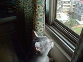 2001:小貓咪看世界