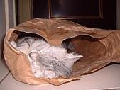 2003:哪裡都可以睡