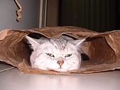 2003:小貓頭