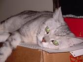 2002:綠眼小怪