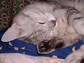 2001:可愛的睡姿