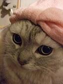 2008:粉紅帽咪獎