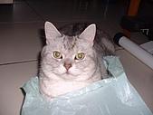 2005:與塑膠袋嬉戲的咪獎