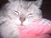 2008:睡香香