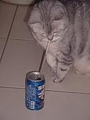 2008:喝咖啡!?