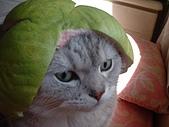 2005:我家也有柚子弟