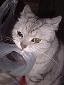 2007:咪獎咬塑膠袋