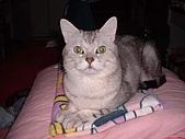 2003:招財貓