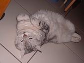 2005:搞笑的睡姿