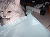 2005:咀嚼中的咪獎