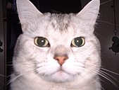 2002:咪獎的大頭照