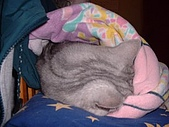 2004:貓手捲
