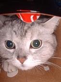 2007:鑽紙箱