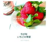 食譜:草莓的回憶.jpg