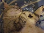 2008:睡覺也裝可愛